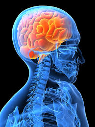 Stress, Inflammation and the Brain - Kristy Allan Kinesiology